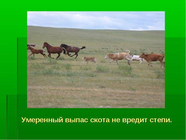Умеренный выпас скота не вредит степи.