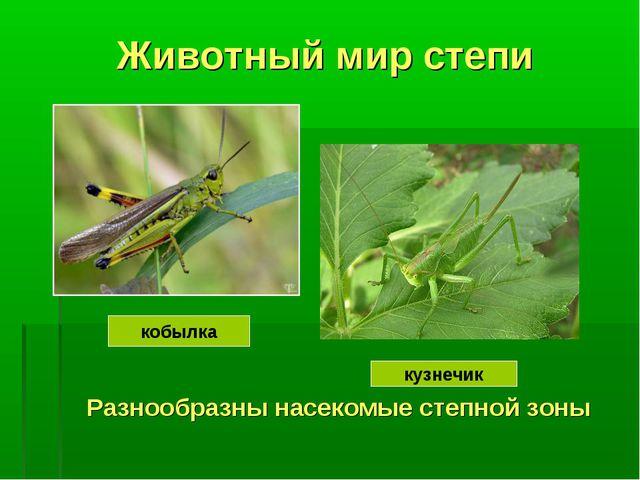 Животный мир степи Разнообразны насекомые степной зоны кобылка кузнечик
