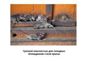 Грозной опасностью для голодных блокадников стали крысы