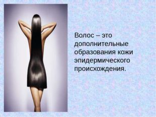 Волос – это дополнительные образования кожи эпидермического происхождения.