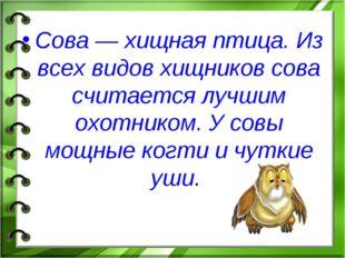 Сова — хищная птица. Из всех видов хищников сова считается лучшим охотником.