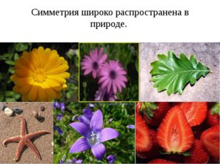 Симметрия широко распространена в природе.