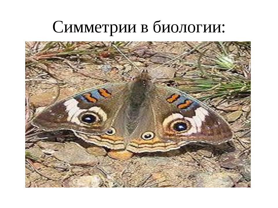 Симметрии в биологии: