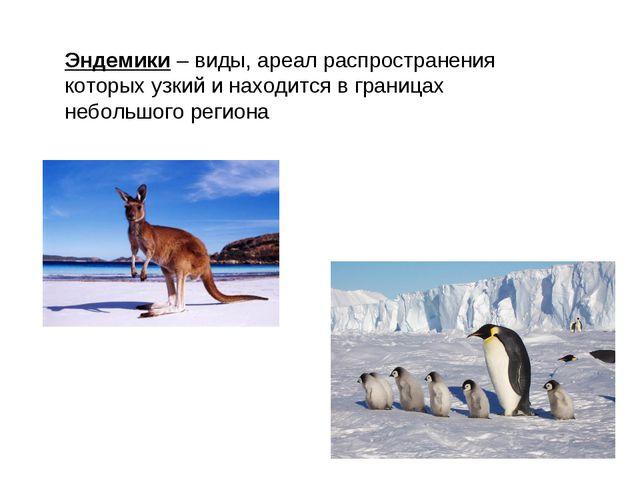 Эндемики – виды, ареал распространения которых узкий и находится в границах н...