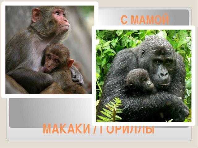 МАКАКИ / ГОРИЛЛЫ С МАМОЙ