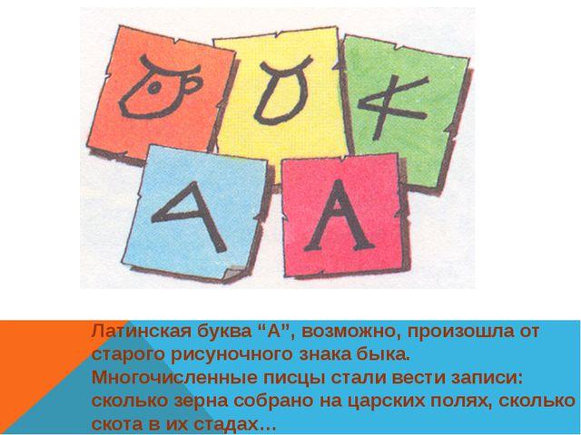 """Латинская буква """"А"""", возможно, произошла от старого рисуночного знака быка. М..."""