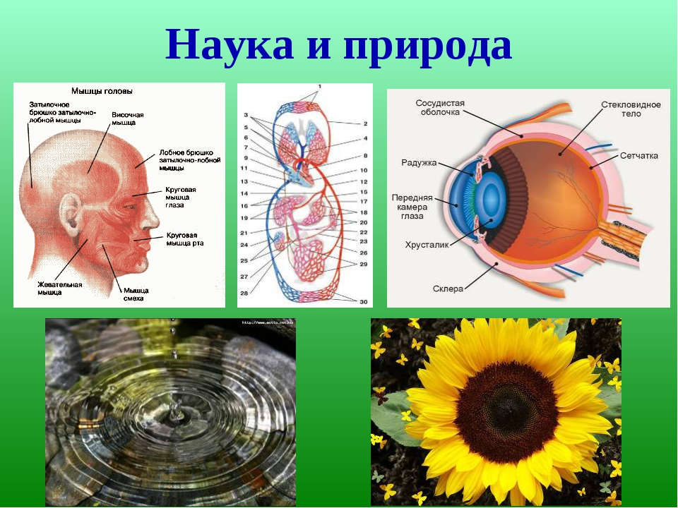 Наука и природа