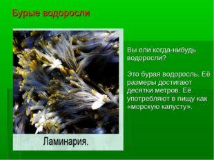 Бурые водоросли Вы ели когда-нибудь водоросли? Это бурая водоросль. Её размер