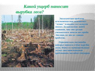 Какой ущерб наносит вырубка леса? Экологическая проблема исчезновения так на