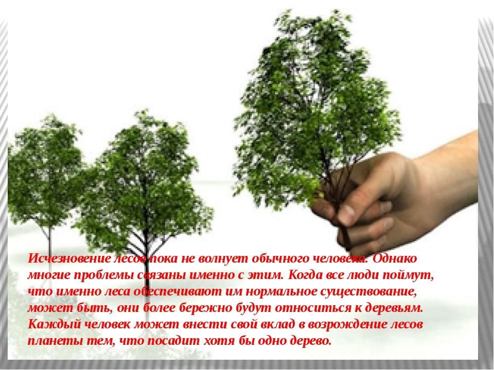 Исчезновение лесов пока не волнует обычного человека. Однако многие проблемы...