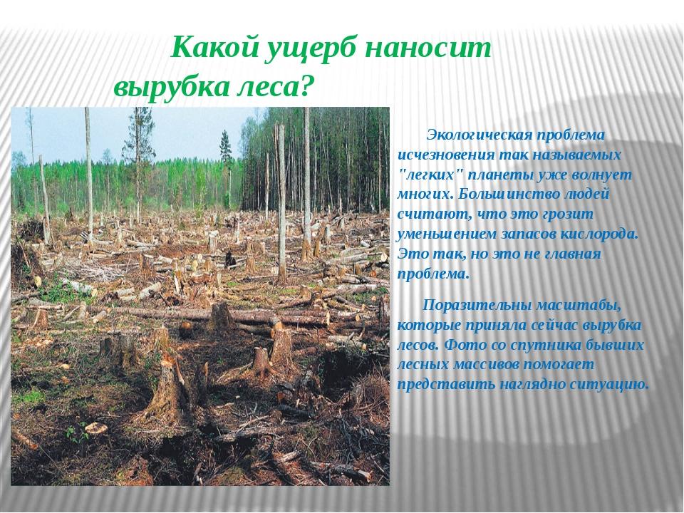 Какой ущерб наносит вырубка леса? Экологическая проблема исчезновения так на...