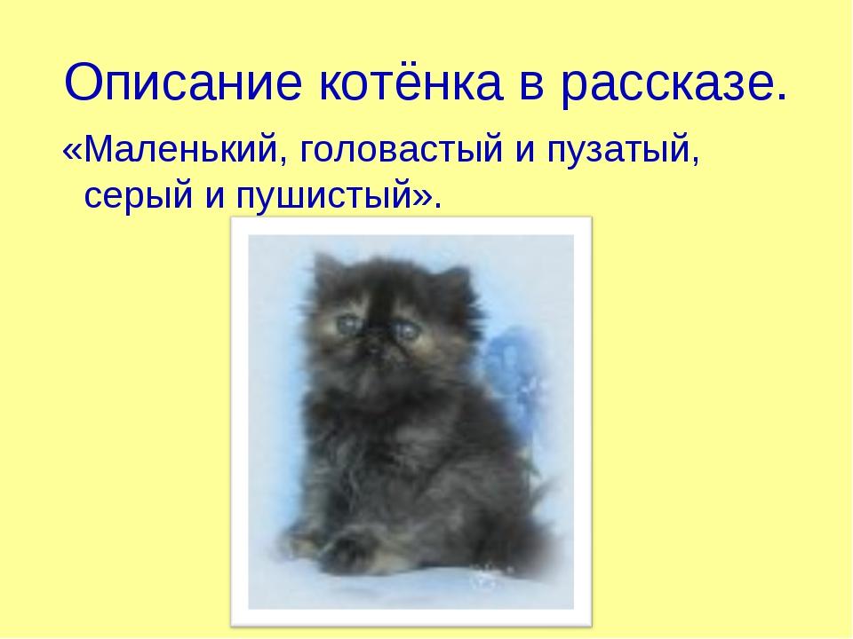 Описание котёнка в рассказе. «Маленький, головастый и пузатый, серый и пушист...