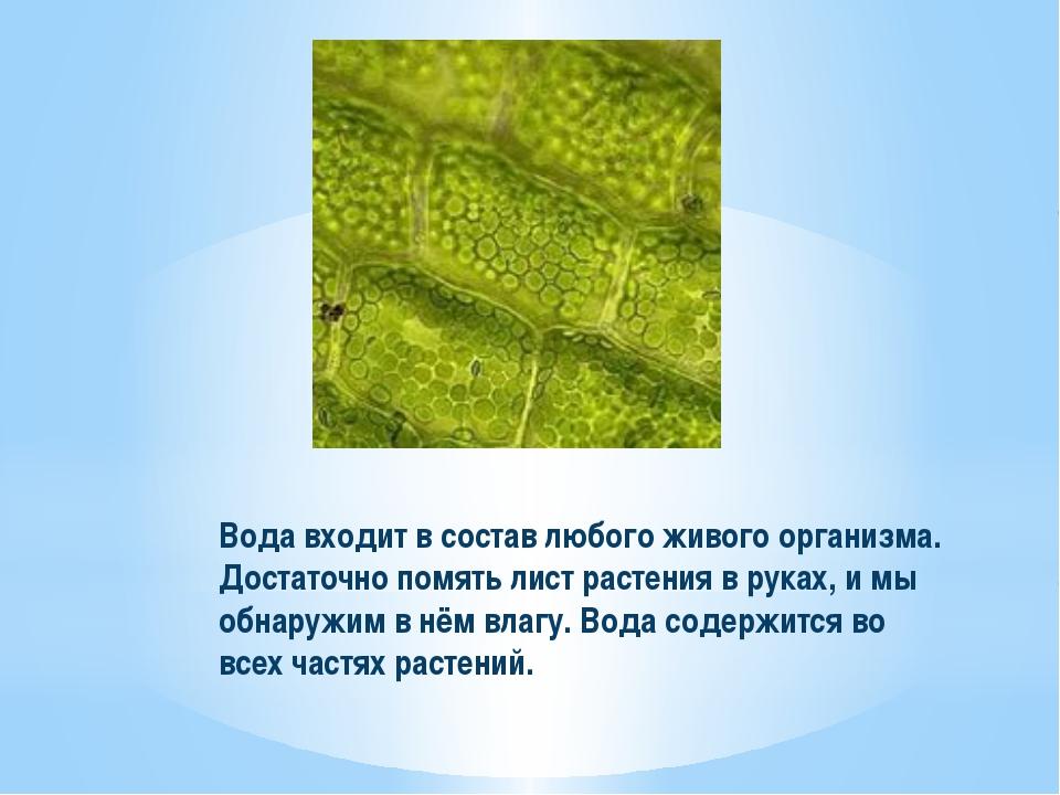 Вода входит в состав любого живого организма. Достаточно помять лист растения...