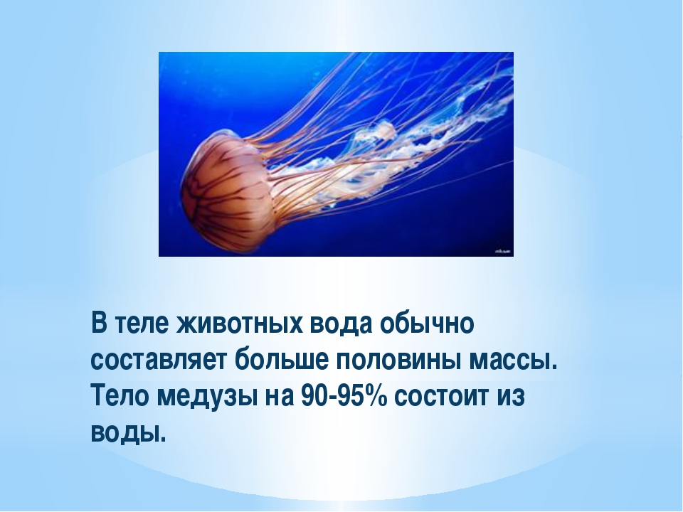 В теле животных вода обычно составляет больше половины массы. Тело медузы на...