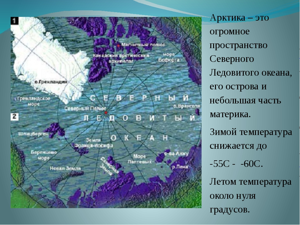 Арктика – это огромное пространство Северного Ледовитого океана, его острова...