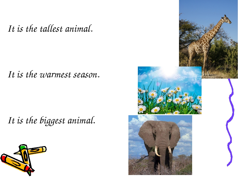 It is the tallest animal. It is the warmest season. It is the biggest animal.