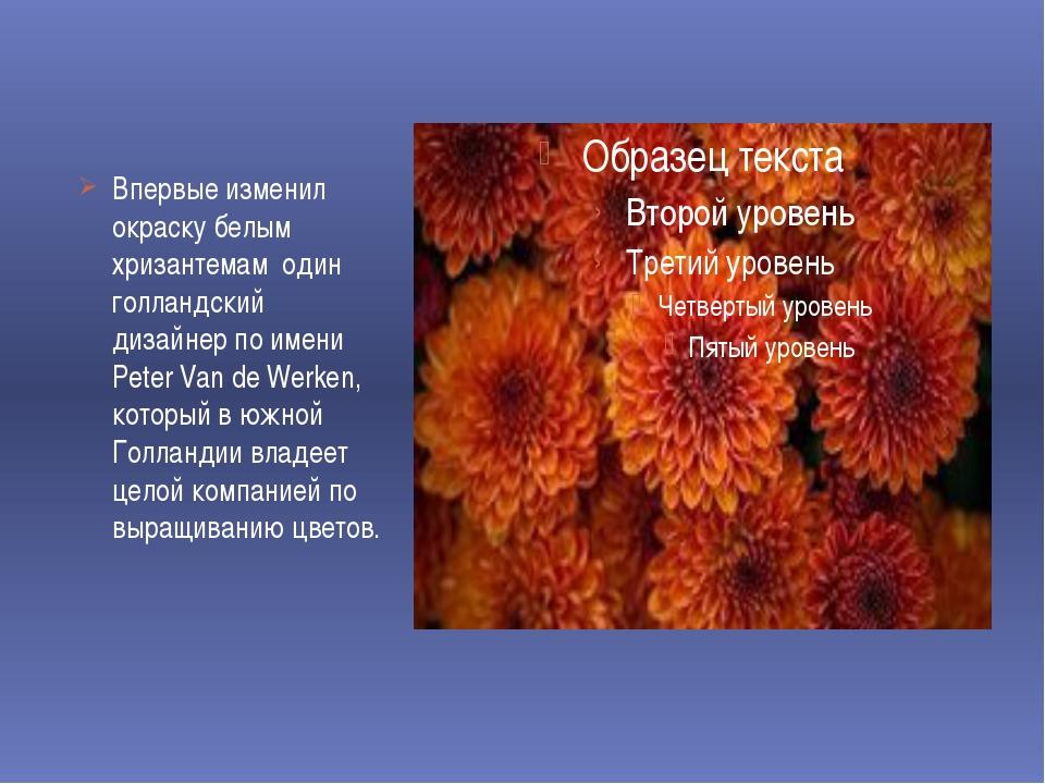 Впервые изменил окраску белым хризантемам один голландский дизайнер по имени...