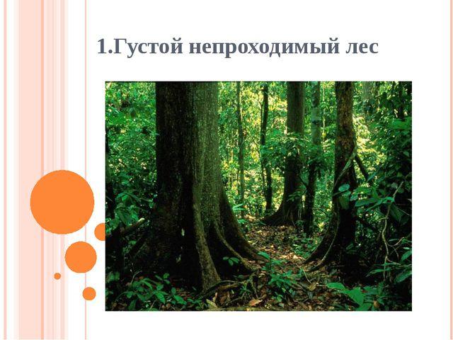 1.Густой непроходимый лес
