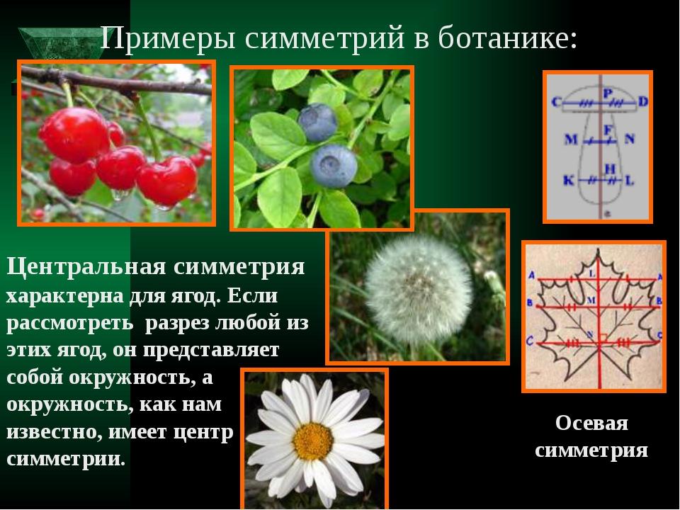 Примеры симметрий в ботанике: Осевая симметрия Центральная симметрия характер...