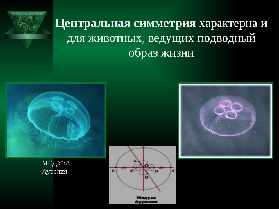 Центральная симметрия характерна и для животных, ведущих подводный образ жизн...