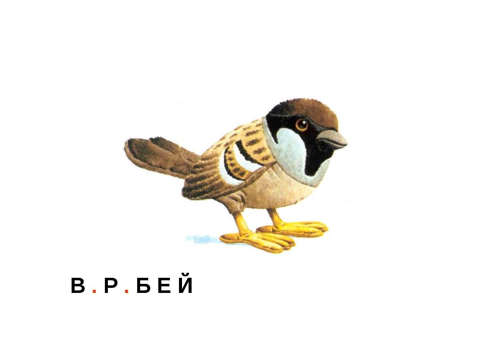 В . Р . Б Е Й