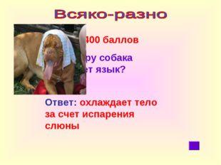 400 баллов Зачем в жару собака высовывает язык? Ответ: охлаждает тело за сче