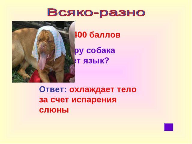 400 баллов Зачем в жару собака высовывает язык? Ответ: охлаждает тело за сче...