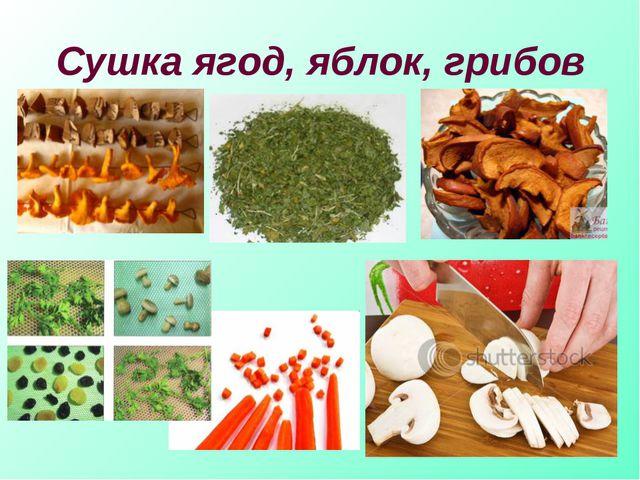 Сушка ягод, яблок, грибов