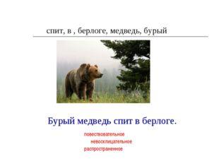 спит, в , берлоге, медведь, бурый Бурый медведь спит в берлоге. повествовател