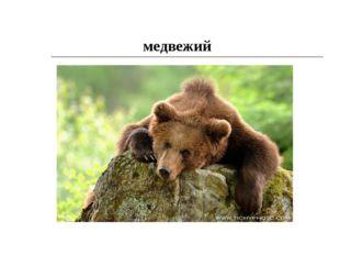 медвежий