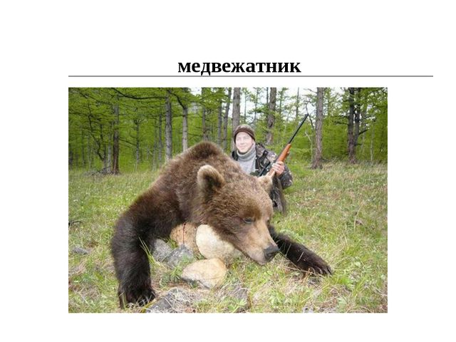 медвежатник