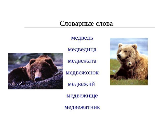 Словарные слова медведь медведица медвежата медвежонок медвежий медвежище мед...