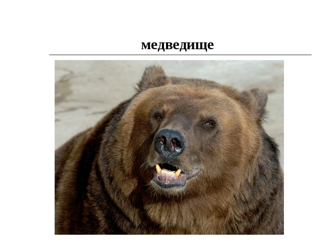 медведище