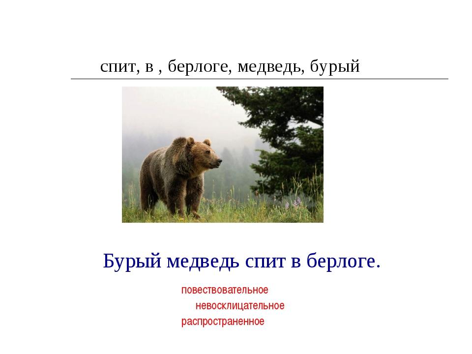 спит, в , берлоге, медведь, бурый Бурый медведь спит в берлоге. повествовател...