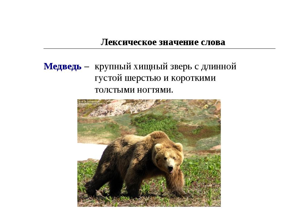 Лексическое значение слова Медведь – крупный хищный зверь с длинной густой ше...