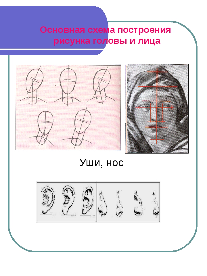 Уши, нос Основная схема построения рисунка головы и лица