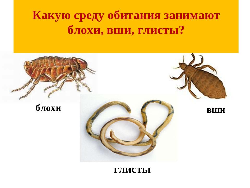 Какую среду обитания занимают блохи, вши, глисты? вши глисты блохи