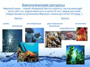 Биологические ресурсы Мировой океан – самый обширный биотоп планеты, насчиты