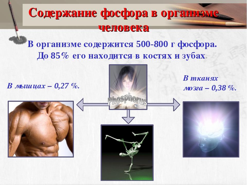 Содержание фосфора в организме человека В тканях мозга – 0,38 %. В мышцах – 0...