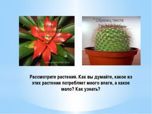 Рассмотрите растения. Как вы думайте, какое из этих растении потребляет много