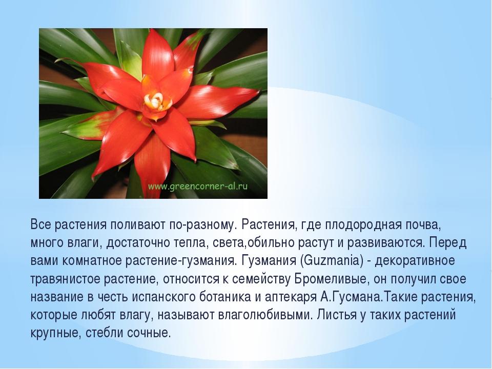 Все растения поливают по-разному. Растения, где плодородная почва, много влаг...