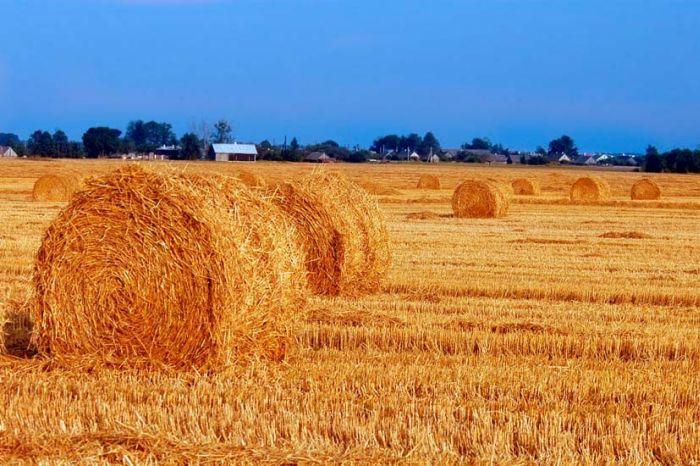 ЕС и ООН запустили в Молдове проект по стимулированию произв…