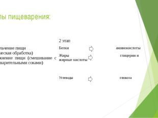 Этапы пищеварения: 1 этап 2 этап Измельчение пищи (механическая обработка) 2.