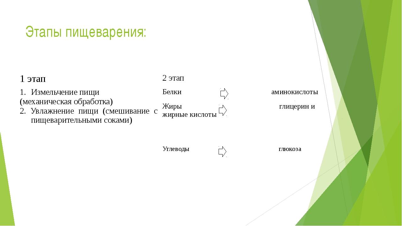Этапы пищеварения: 1 этап 2 этап Измельчение пищи (механическая обработка) 2....