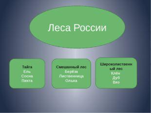 Леса России Тайга Ель Сосна Пихта Смешанный лес Берёза Лиственница Ольха Шир