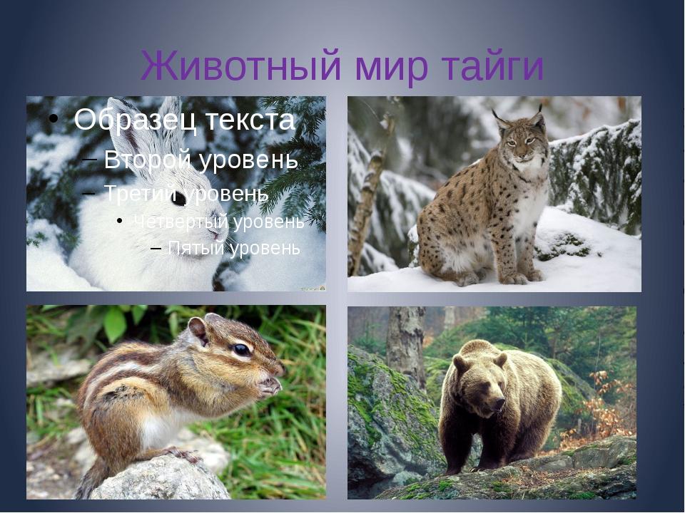 Животный мир тайги