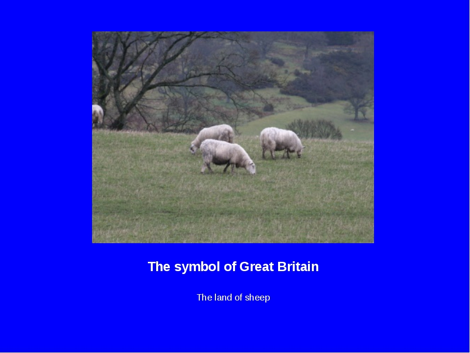 The symbol of Great Britain The land of sheep