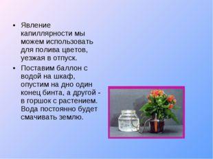 Явление капиллярности мы можем использовать для полива цветов, уезжая в отпус