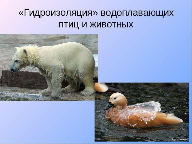 «Гидроизоляция» водоплавающих птиц и животных