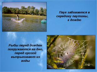 Рыбы перед дождем погружаются на дно, перед грозой выпрыгивают из воды Паук з